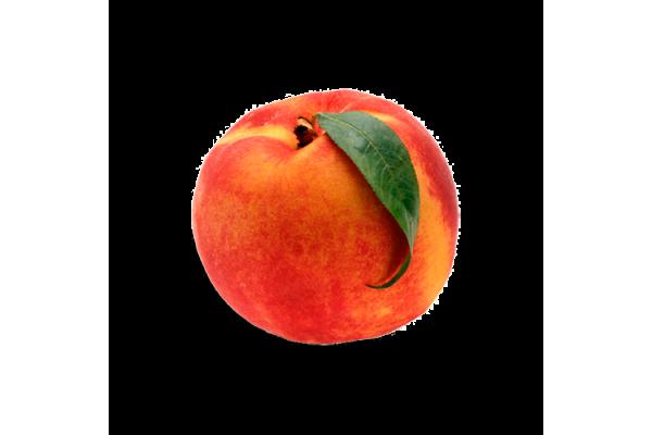 Kaliteli Meyve İçin, Kaliteli Fidan ile Başlar